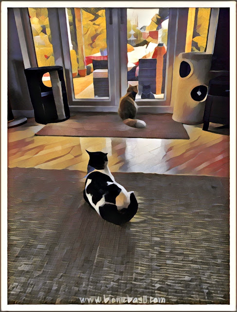In and Out Selfies with Parsley, Fudge and Melvyn ©BionicBasil® Caturday Art