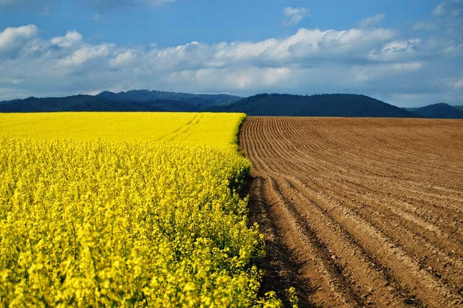 Природні ресурси України: Земельні ресурси України