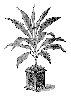 plant image digital download botanical art