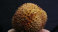 fruit around the world, strange fruit, strange fruit around the world, crazy fruit, crazy fruit around the world, DURIAN