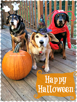 3 dogs dressed up for Halloween