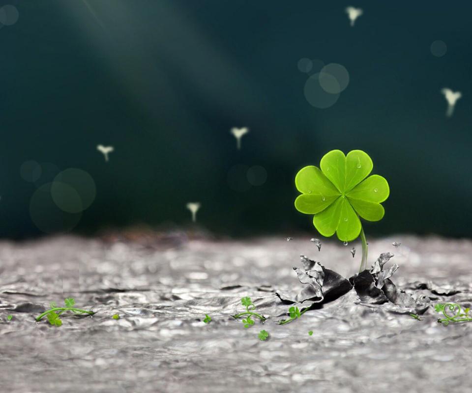 Hình Ảnh Cỏ Bốn Lá Đẹp: May Mắn, Niềm Tin, Hy Vọng & Tình Yêu