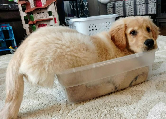 20 Photos Prove That Golden Retrievers Are The Best Dogs In The World