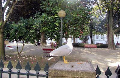 Gaivota no Jardim de São Lázaro