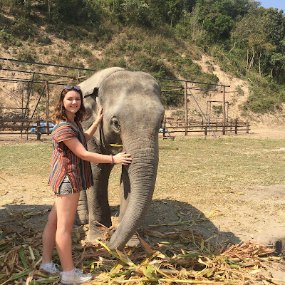 Elephant Jungle Sanctuary Chiang Mai Thailand