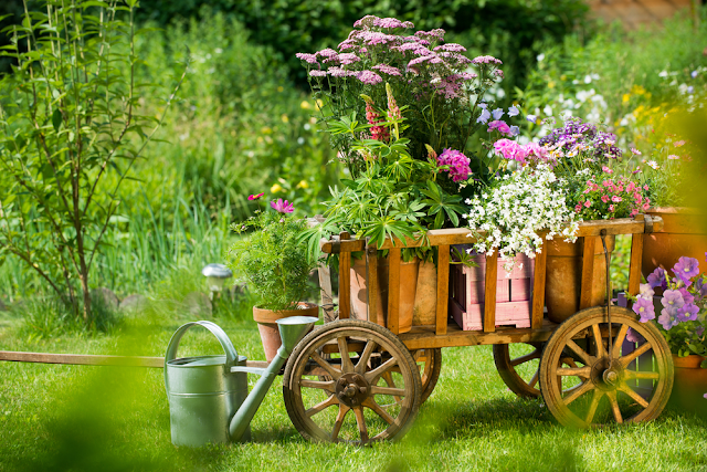 perennials planting