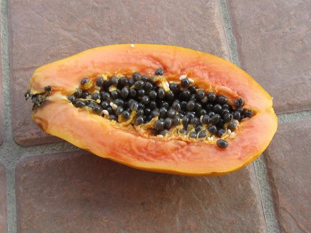 Frutto maturo Papaya