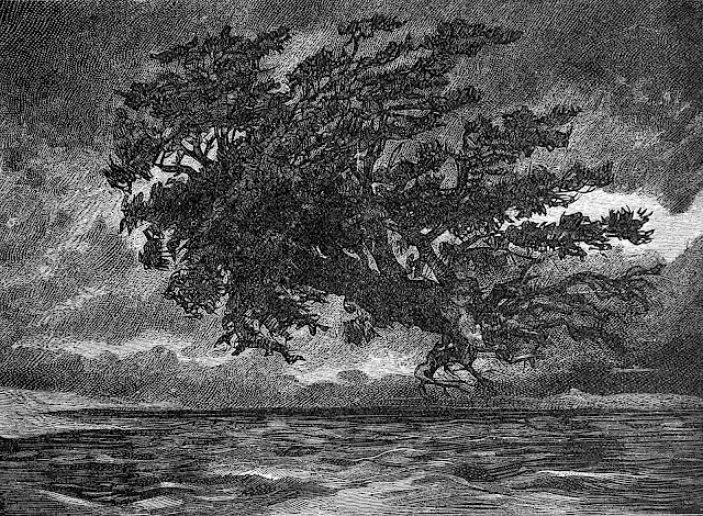 an illustration by the famous novelist Victor Hugo of a tree hurtling over water