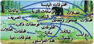 دورة الفوسفور