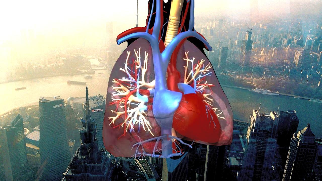 Coronavirus lungs.