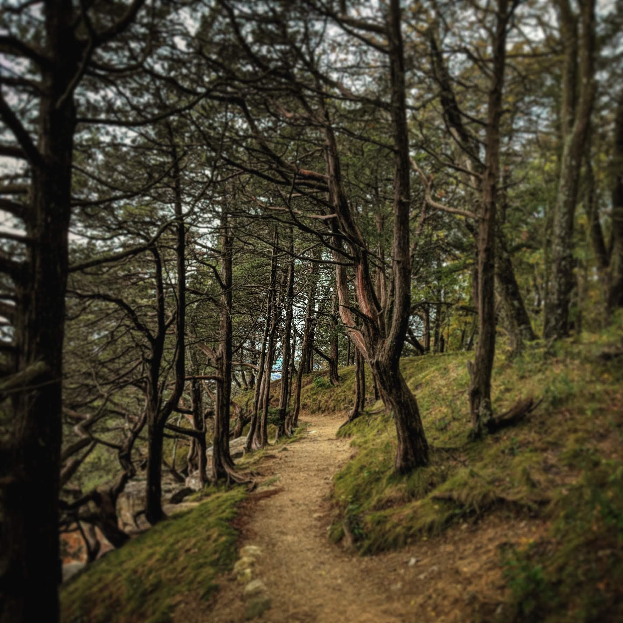 trail along cliff through cedar trees