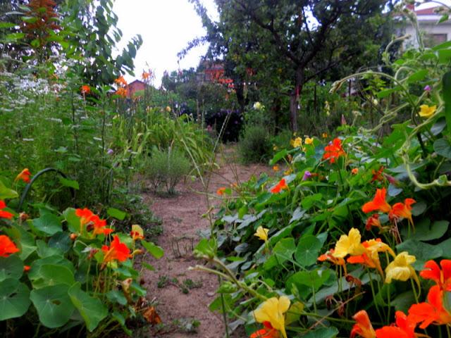 L 39 orto dei colori fiori arancio giallo e rosa for Dalie giganti