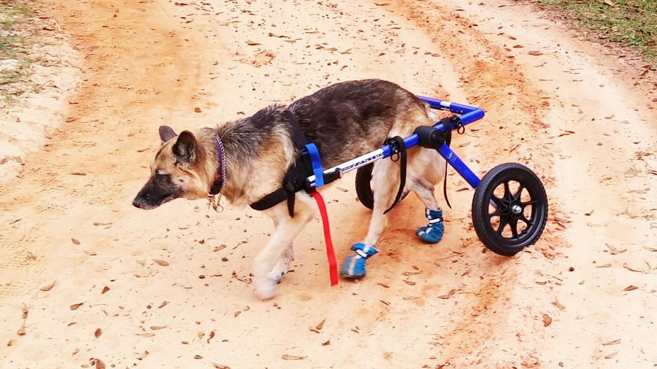 5 façons d'aider les chiens moins adoptables à trouver un foyer