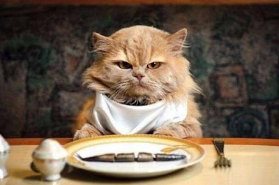 Kucing Tidak Mau Makan? Ternyata Inilah Makanan Yang Berbahaya Untuk Kucing