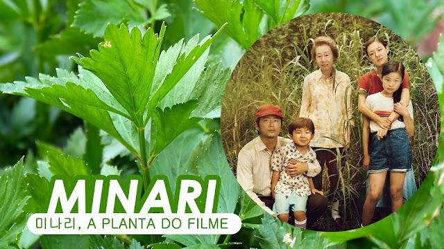Minari: conheça a planta coreana que dá nome ao filme