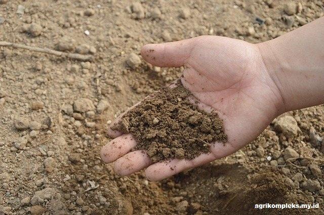 Bahan Organik, Humus, dan Jejaring Makanan dalam Tanah