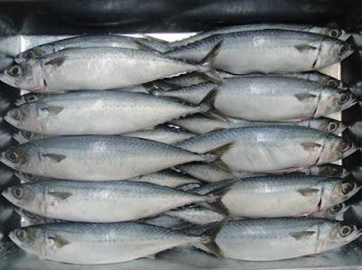 About Us : Frozen Pacific Mackerel, Mackerel Fish Frozen, Price of King Mackerel, Mackerel Lure, Mackerel Hg Frozen Fish