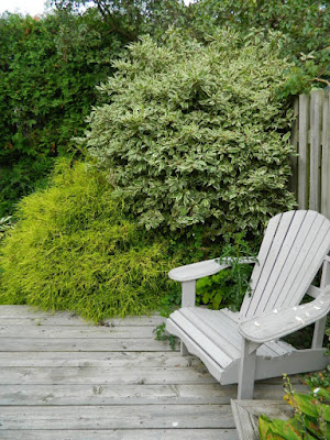 Leslieville Toronto Garden Cleanup Before by Paul Jung Gardening Services--a Toronto Gardening Company