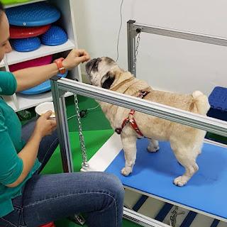 exercícios de propriocepção em cães