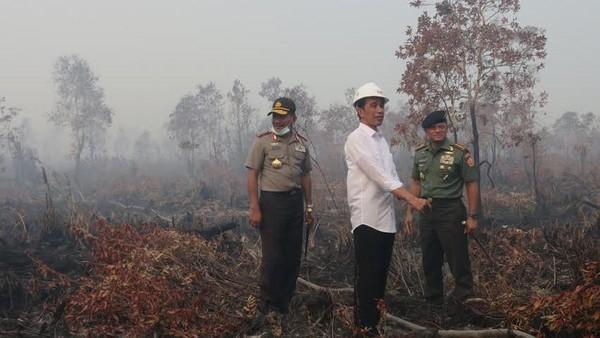 Pasal 'Sakti' Penjerat Pembakar Hutan Dihapus di Omnibus Law, Walhi: Konyol!