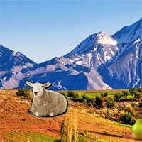 Wow Mountain Sheep Escape