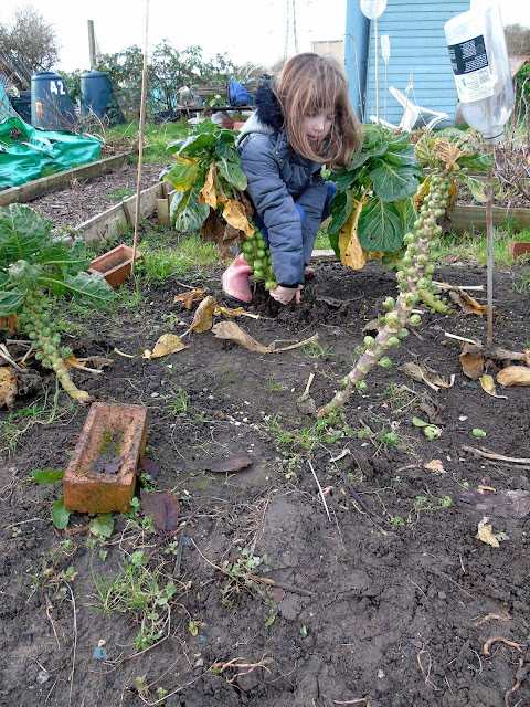child pulling brussel sprout tree from the ground