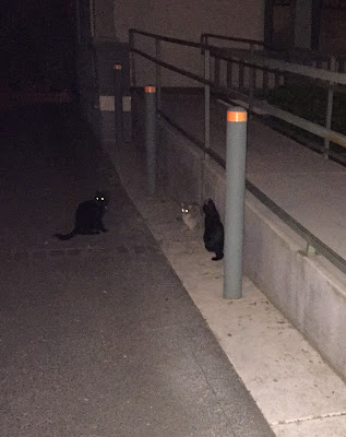 Three cats gathering outside