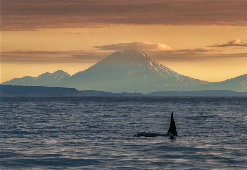 The nature in its original form killer whales against