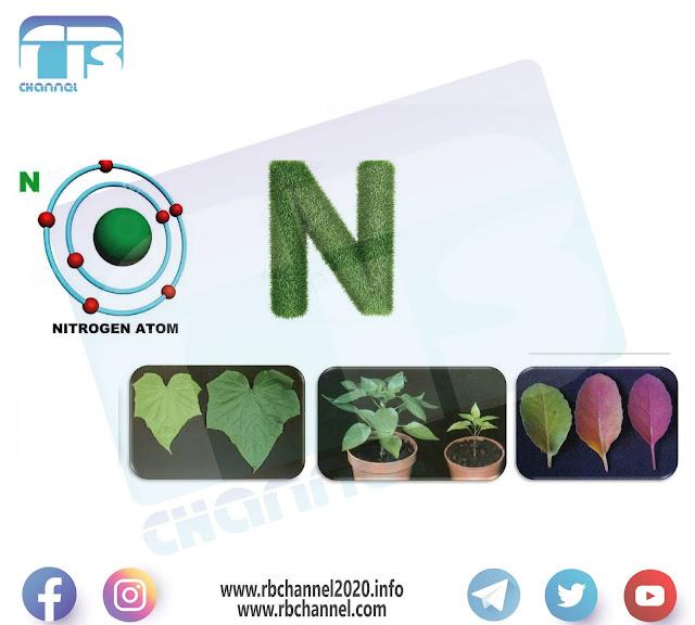 Nitrogen in soil and plants | Symptoms of nitrogen deficiency or increase