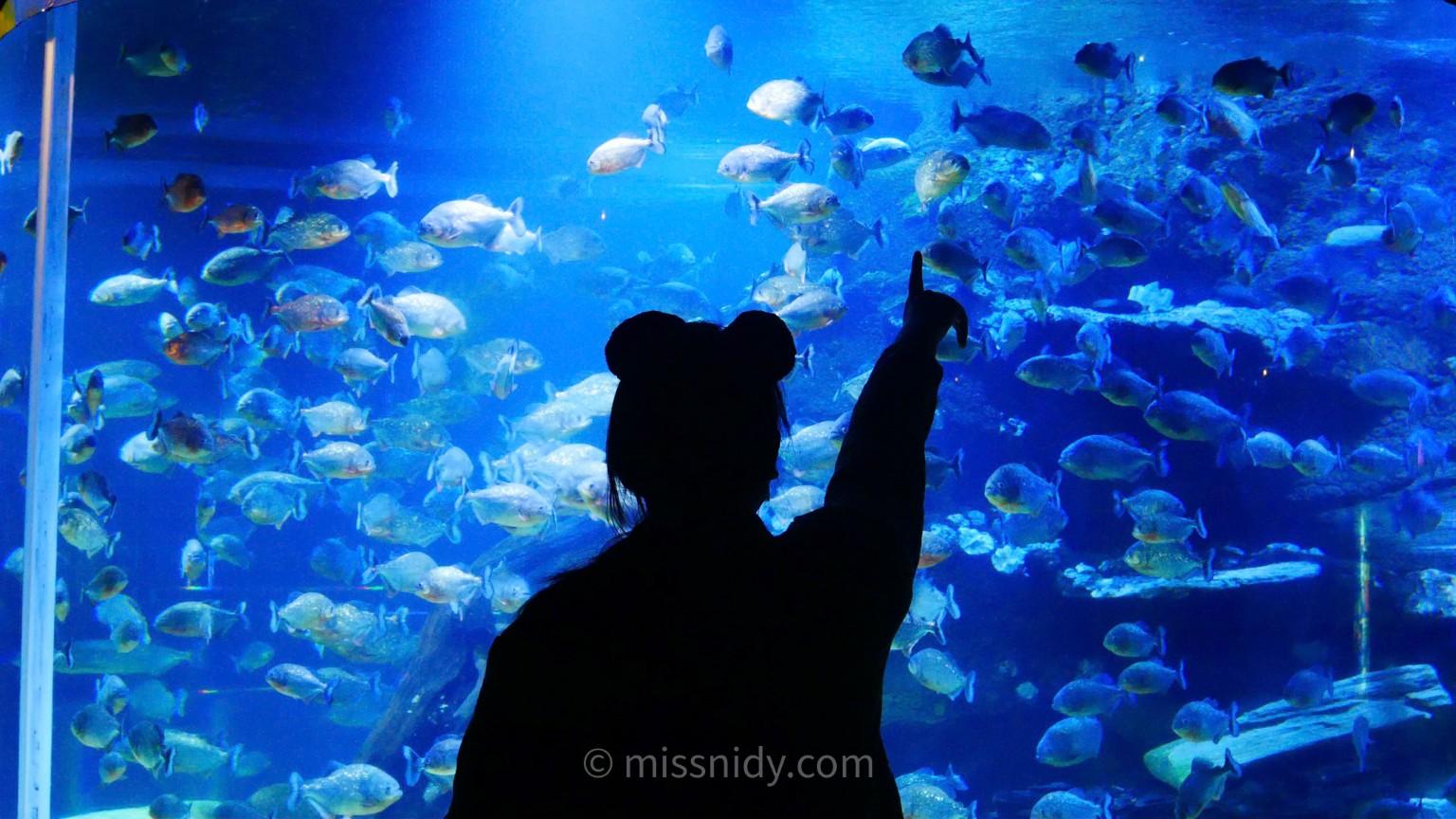 jadwal makan ikan piranha di seaworld ancol
