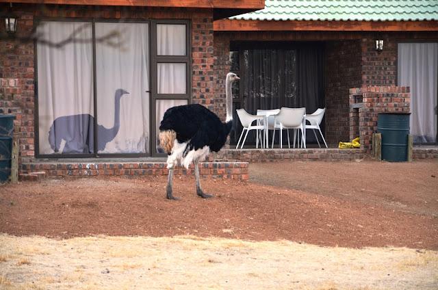 Hotel Review - Sangiro Lodge #Bloemfontein @LodgeSangiro @Bains_Lodges #SouthAfrica