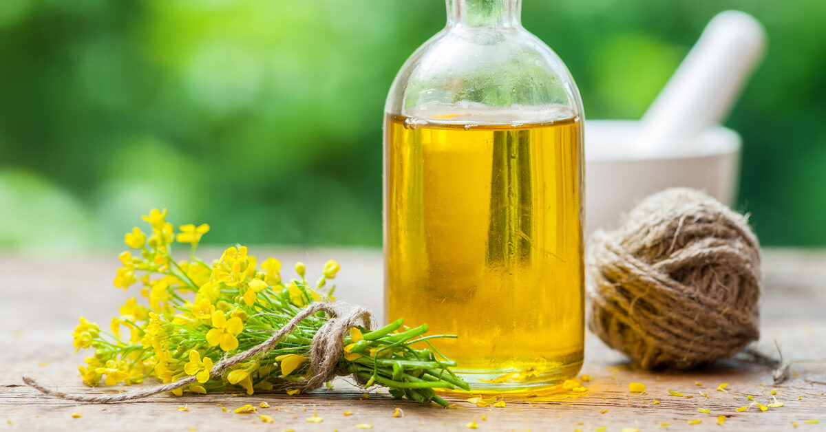 Benefits of canola oil for diet and belly fat