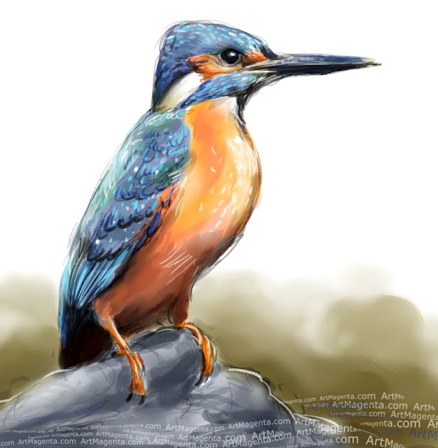Kingfisher sketch painting. Bird art drawing by illustrator Artmagenta.