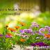 Manfaat Plastik Uv - Cara Sempurna & Gampang Merawat Flora Hias