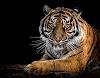 Auman Harimau Muda (Cerita Silat Harimau Merapi Jilid 1)