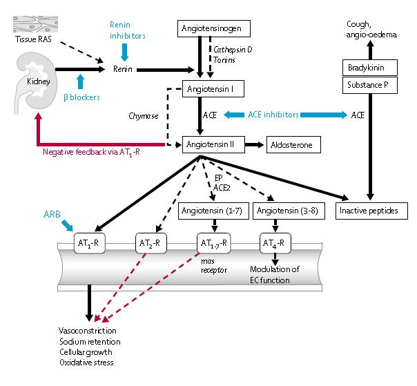 inhibidores de ace o asociación de diabetes arbs