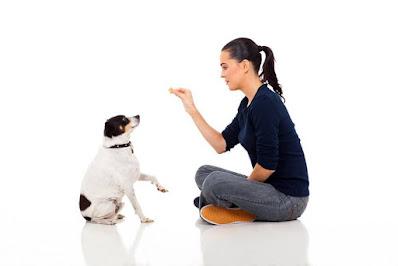 Tips consejos entrenar perro