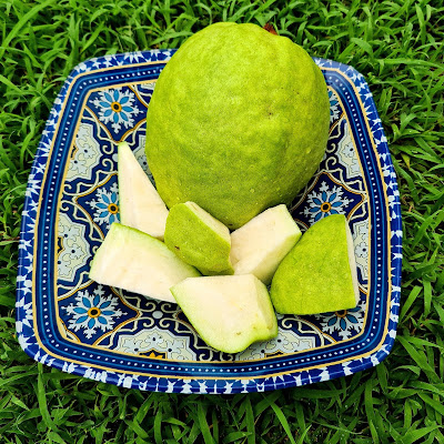 benefits of guava leaves, guava benefits and side effects, benefits of guava for hair, guava leaves for infection, how to eat guava fruit, guava benefits during pregnancy, eating guava at night, guava benefits for kidney, guava benefits during pregnancy, how to eat guava fruit, benefits of guava for hair, guava benefits for kidney, guava side effects, calories in 1 large guava, guava leaves and fertility, guava leaves benefits for hair, eating guava at night, guava leaves for infection, how to use guava leaves for flat tummy, psidium, guava benefits and side effects, benefits of guava bud, healthy guava juice, guava leaves tea during pregnancy, guava seeds harmful, guava nutrition data, calories in 1 small guava, does banana contain vitamin c, papaya protein, papitha fruit, potassium in papaya, is guava good for stomach ulcer, guava leaf toothpaste, tender guava leaves, guava leaves for teeth cavity, guava leaves benefits and side effects, guava leaves for weight loss review, khasiat jambu batu putih, keburukan buah jambu batu, jambu batu merah, mana nak cari jambu batu merah, keburukan jambu batu, khasiat jambu batu untuk diet, khasiat jambu batu merah, jambu batu kampung, kebaikan jambu batu untuk ibu mengandung, kebaikan jambu air, biji jambu batu, khasiat daun pokok jambu batu, efek makan jambu biji setiap hari, khasiat daun buah jambu batu, jambu batu kulit merah, jambu batu kampung, jambu batu tanpa biji, jambu batu untuk pesakit kanser, jambu batu lohan, jambu batu in chinese, buah jambu air, jambu batu cameron, pasaran jambu batu, indeks kematangan jambu batu, cara pembiakan jambu air, daun pokok jambu air, nama saintifik pokok jambu, jambu batu in english, jambu susu, khasiat jambu batu untuk ibu mengandung, orange vitamin c, kalori sepotong jambu batu, jambu batu asam boi, blog with cris, malaysian fruits, malaysia travel influencer, rare fruits in malaysia, buy fruits online malaysia, malaysian fruits wiki, malaysian fruit photo, malaysia fruit durian, ma