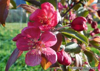 fauna selvatica e prato fiorito della fattoria didattica dell ortica Savigno Valsamoggia Bologna Zocca