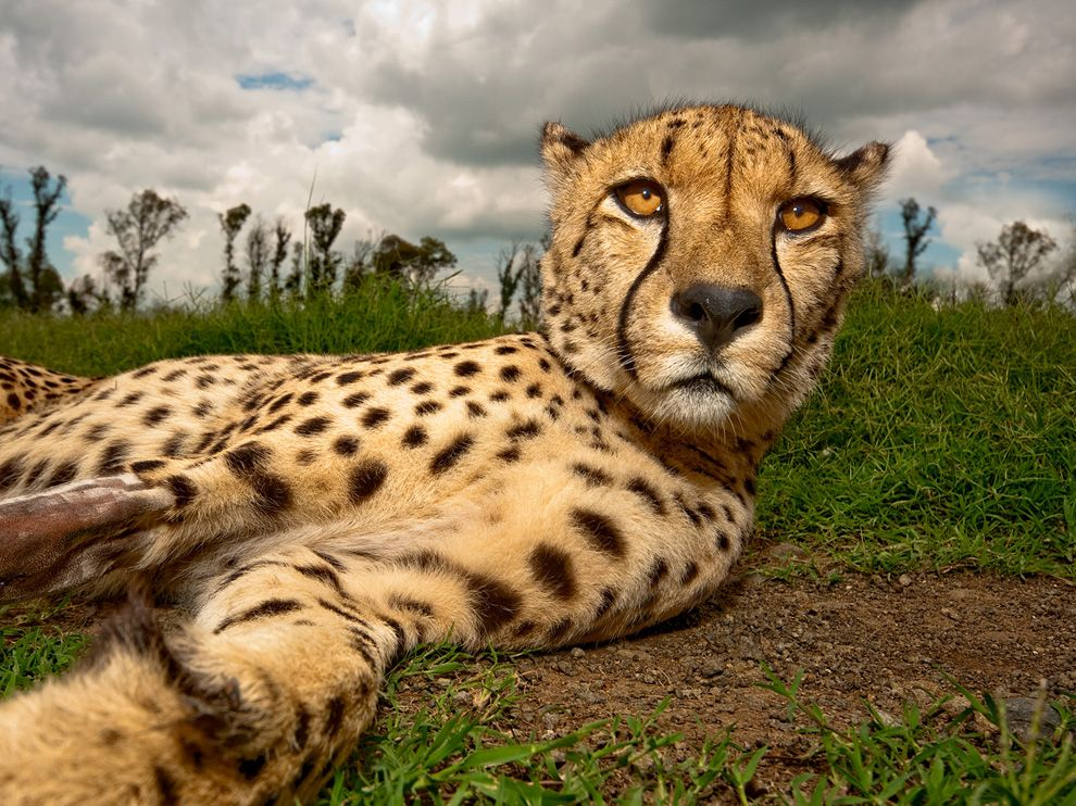 Amazing Animal Pictures from National Geographic (July