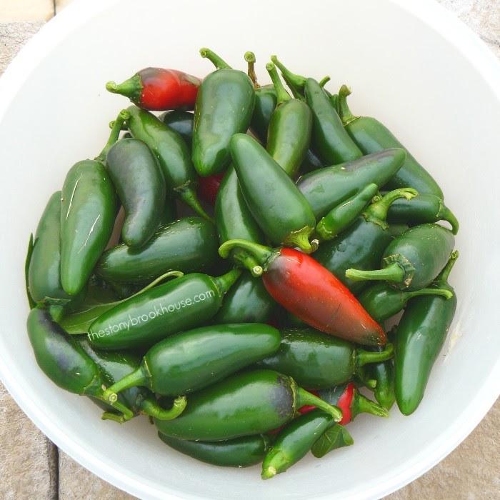 Jalapeño harvest