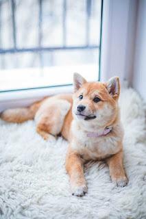 تحميل صور كلاب روعة ، احلى صور كلاب كيوت روعة hd صورة كلب 2021