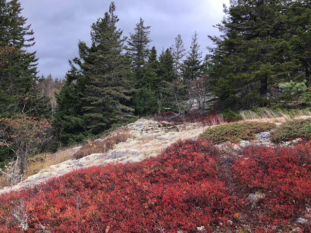red and white plants on a hillside