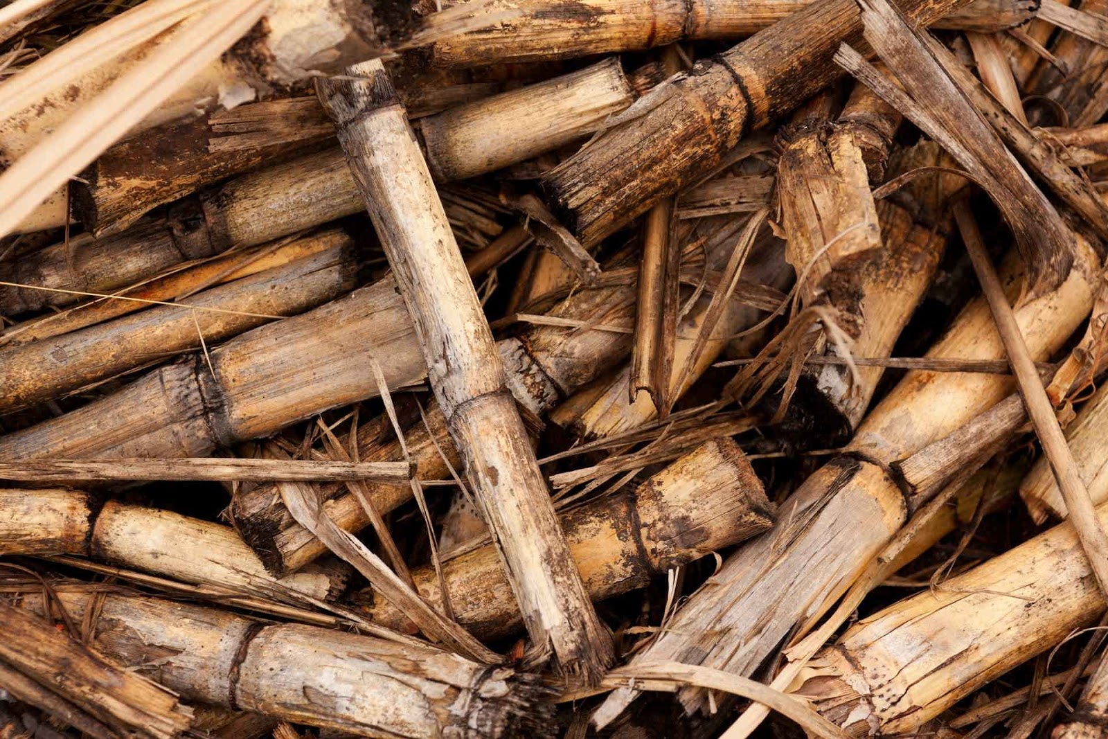Biomass energy pros and cons
