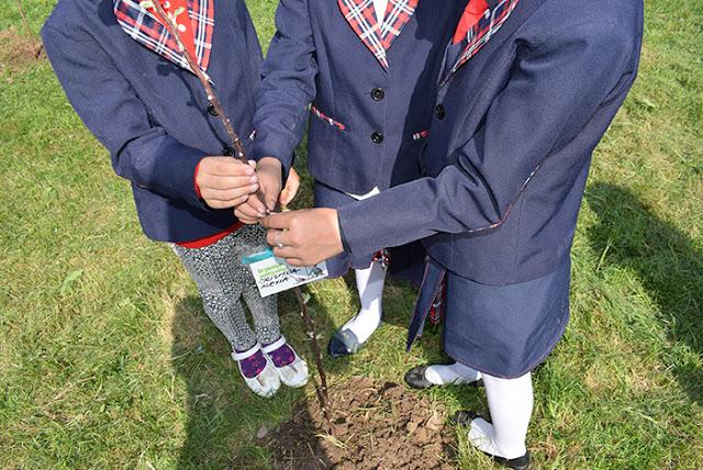 """cora Romania a plantat pomi fructiferi in scoli in cadrul proiectului """"Un pomisor pentru viitor"""" – editia a II-a"""