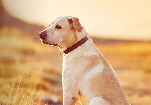 the way to Find All Natural Pet Products