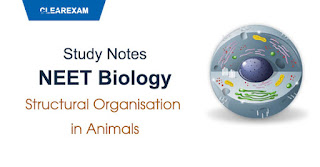 Structural Organization in Animals