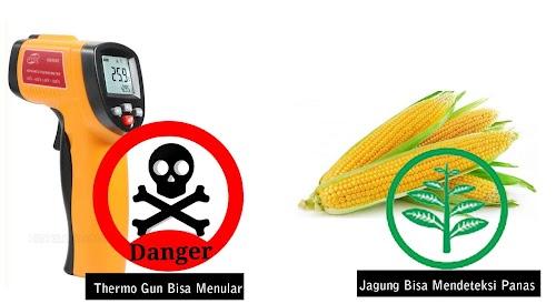 Thermo Gun dapat menularkan virus namun bisa gunakan jagung, Kok bisa ?