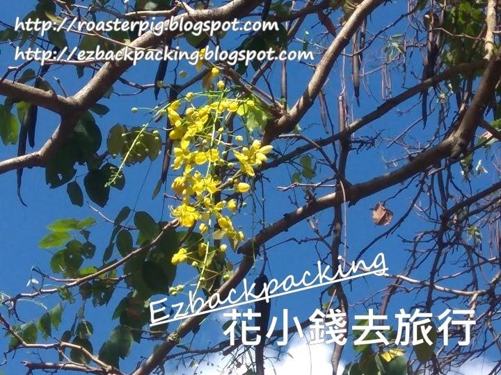 九龍公園豬腸豆