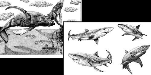 00-Animal-Drawings-Ashley-Habernal-www-designstack-co